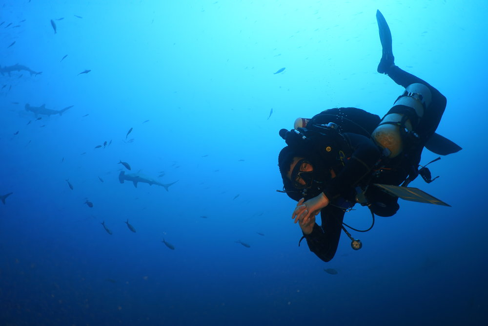 Viktor Brandtneris dives with hammerhead sharks in the Galapagos Islands, Ecuador