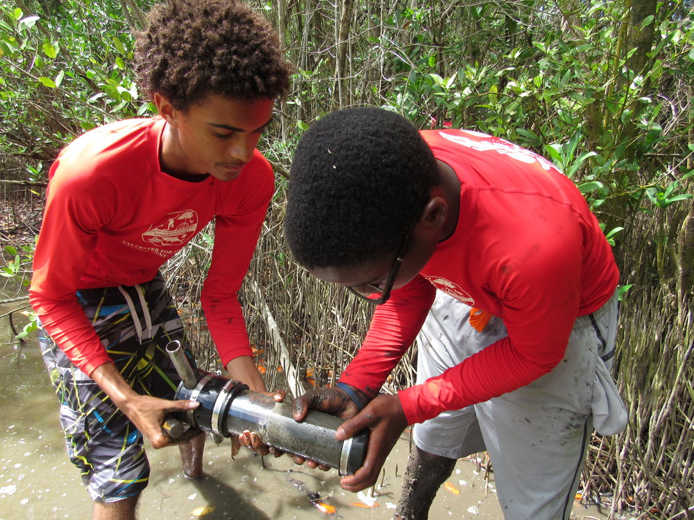 Participants in the Youth Ocean Explorers Summer Program hosted at UVI learn how to take core samples in a mangrove.