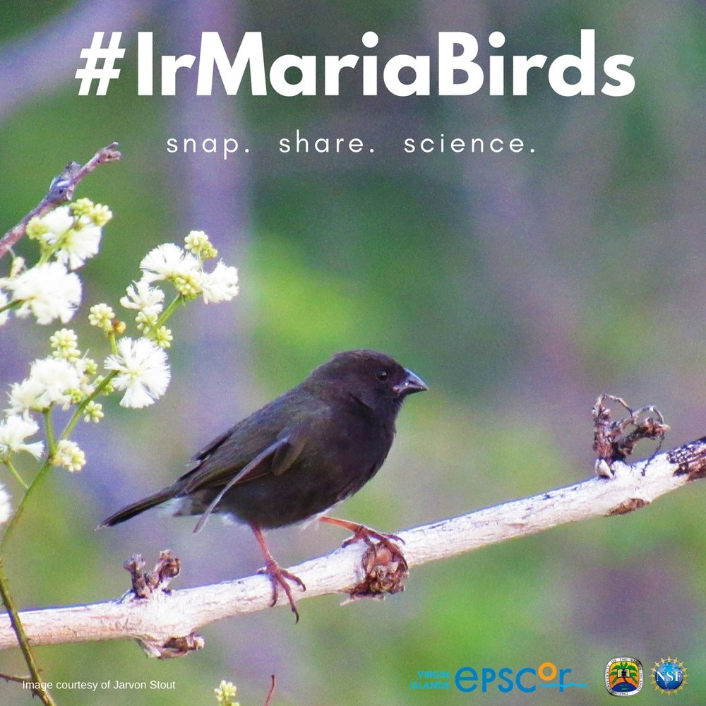 IrMariaBirds Campaign-4.jpg
