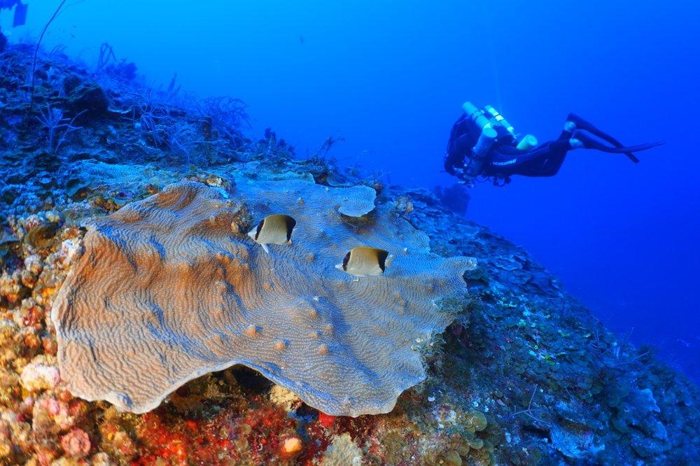 Dr. Tyler Smith surveys coral reefs at 65m depth. Photo: Viktor Brandtneris