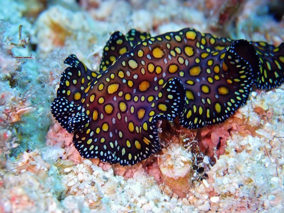 SeaSlug2.jpg