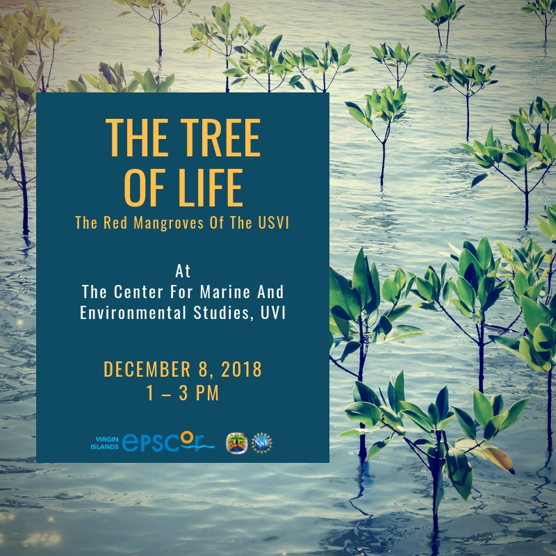 Tree of Life IG.jpg