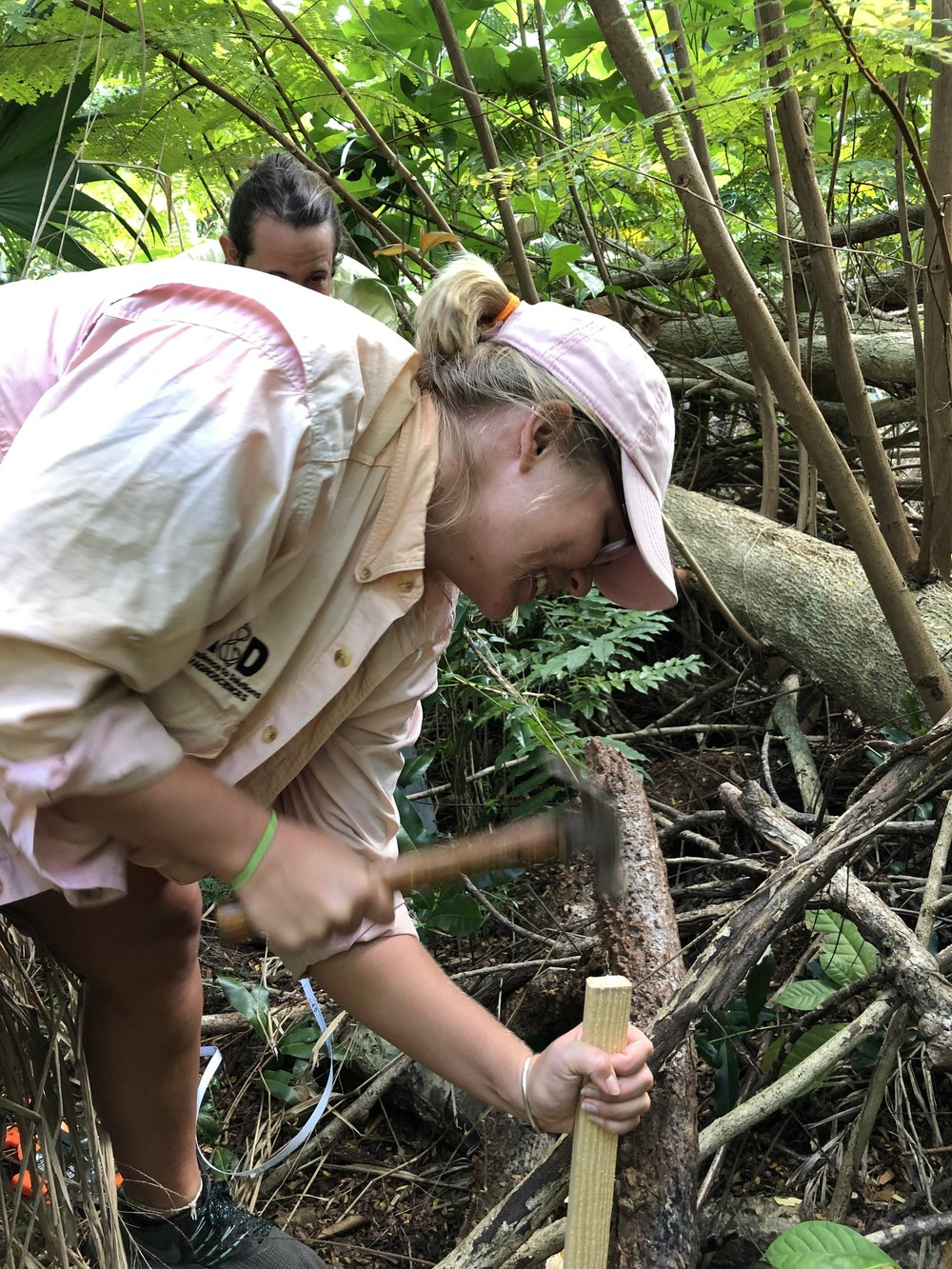 """Kaliegh Schlender hammers a stake to mark out """"study plots"""" in the area that the team will be using to study the new growth following the hurricanes."""