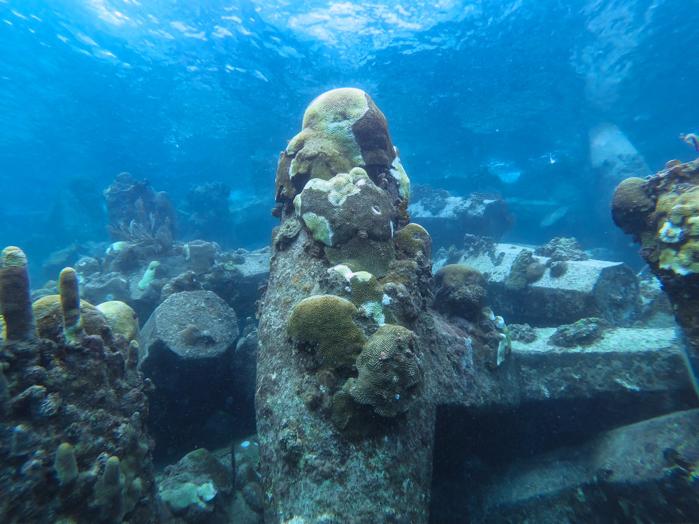 Signs of coral disease were found on pilings at the Cyril E. King Airport, St. Thomas. Photo by Joseph Townsend on February 2, 2019