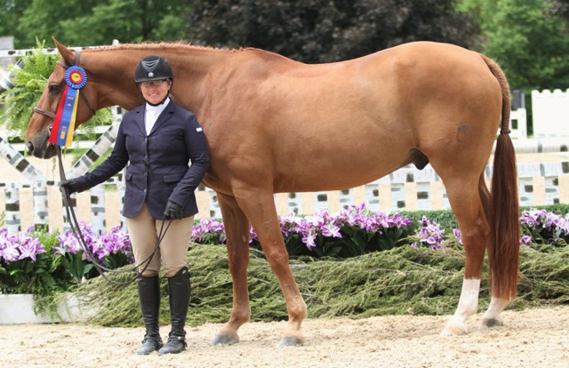 "$2000 Amateur Owner 3'6"" Champion    Rembrandt owned and ridden by Karlene Moss"