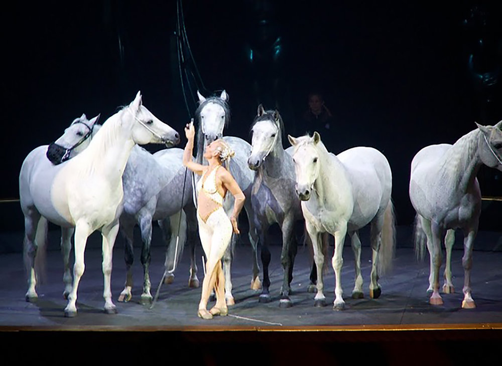Former Cavalia performers Sylvia Zerbini and her liberty stallions. Photo courtesy of Sylvia Zerbini