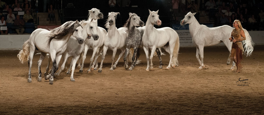 Former Cavalia performers Sylvia Zerbini and her liberty stallions. Photo by courtesy of Sylvia Zerbini