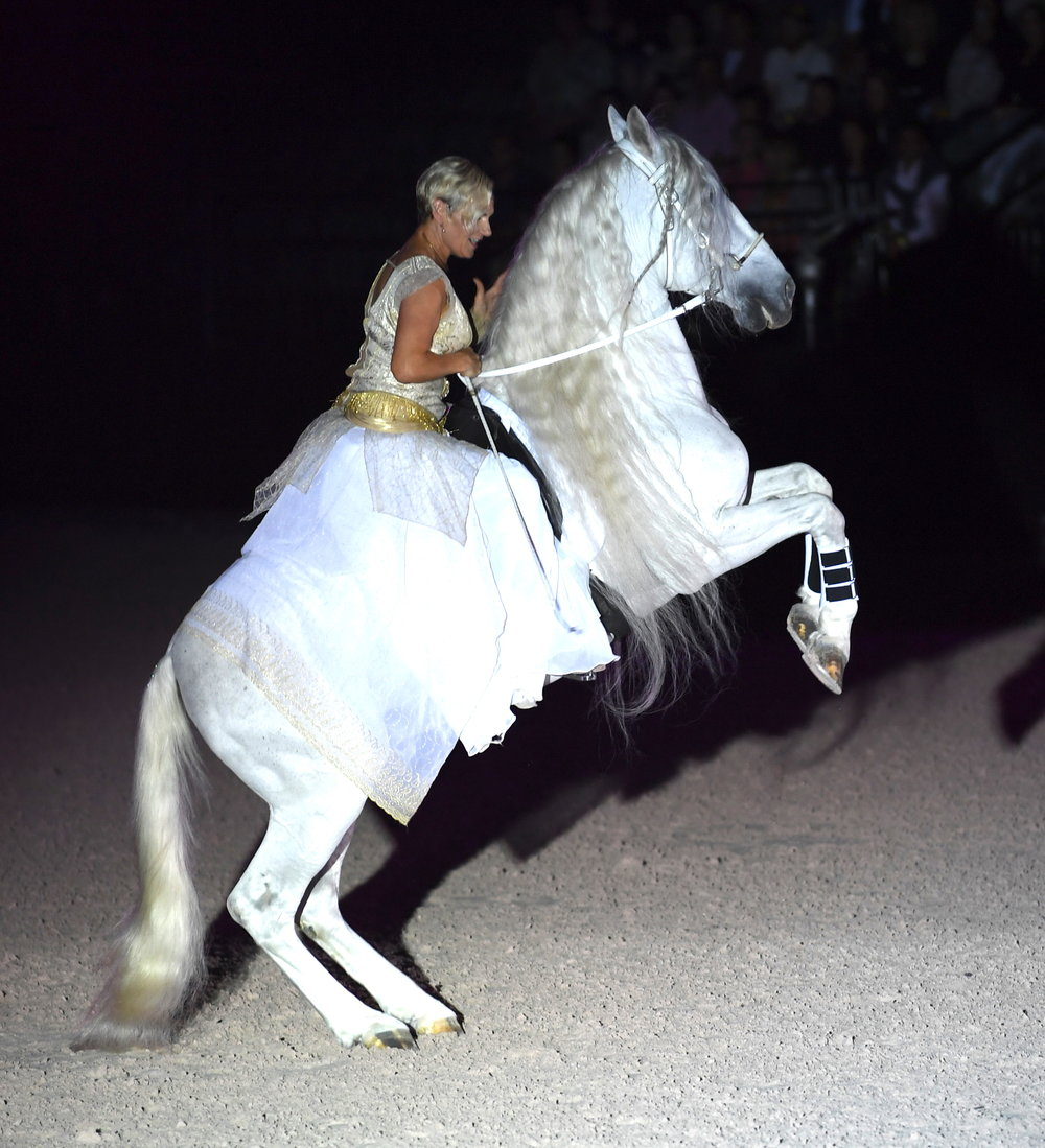 Sylvia Zerbini wowed the audience with her breathtaking stallions. DDeRosa photo.