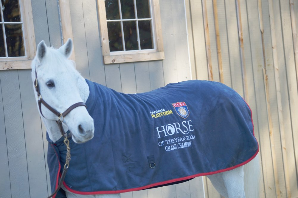 Eurostar models the 2009 Farnam Platform USEF Horse of the Year cooler. Photo by Kelli A. Kelliher