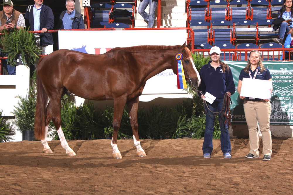 Harley, from Middle Tennessee State University, was named the SmartPak Most Popular Horse. Photo by  alcookphoto.com