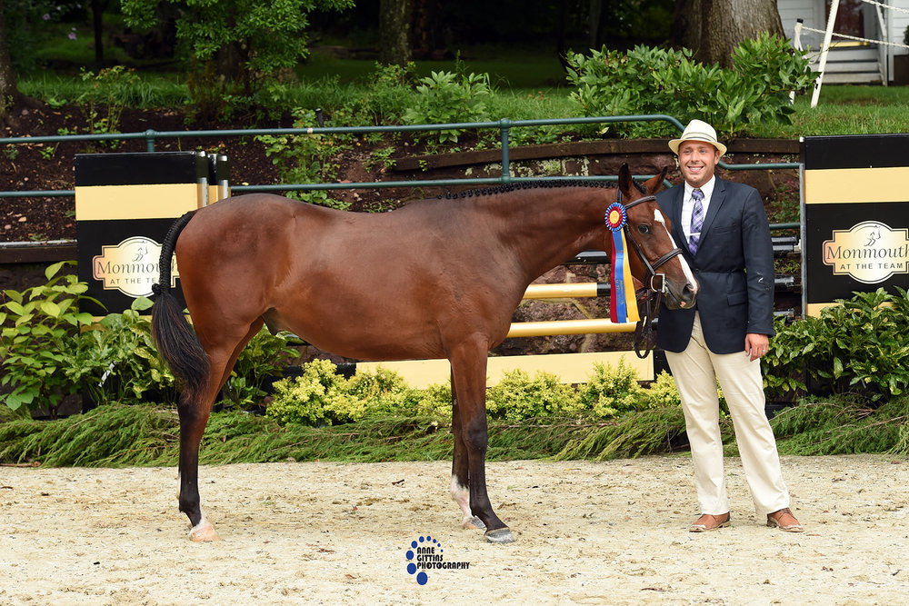 In the Hunter Breeding division, Winterfells Casterly Rock, owned by Konicki Enterprises and handled by Jason Yannitello, was named Best Young Horse. Photo by Anne Gittins Photography