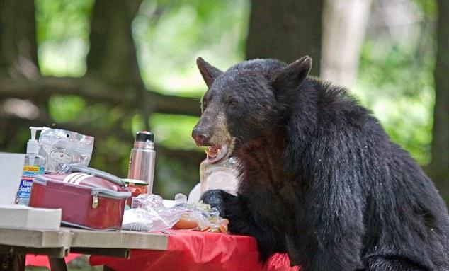 Embrace your inner snack loving monster of the woods.