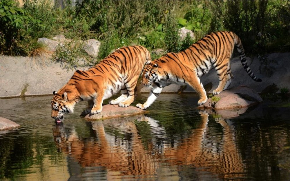 If I lead an orange cat-shaped horse to water, it should drink right? Good horsie, drink the water now!