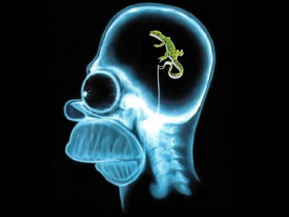 lizard brain.jpg