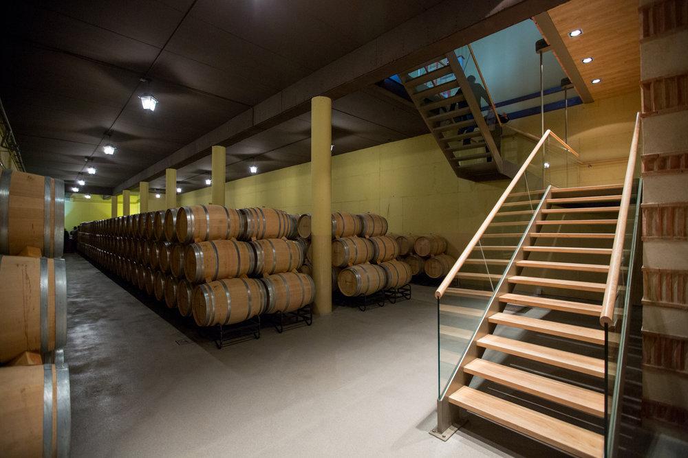 Estates & Wines Jan2016 Training Toro almaphotos-1312-web.jpg
