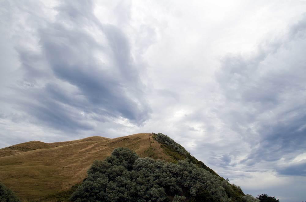 Hill before Gisborne, January 2016*