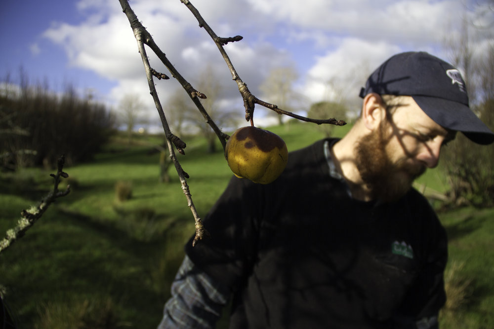 Ben and the Last Apple in the Orchard, Whanganui, 2017