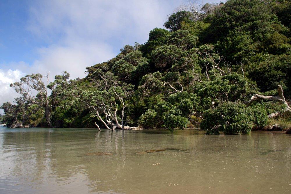 Pataua Estuary, Pataua South, 2018