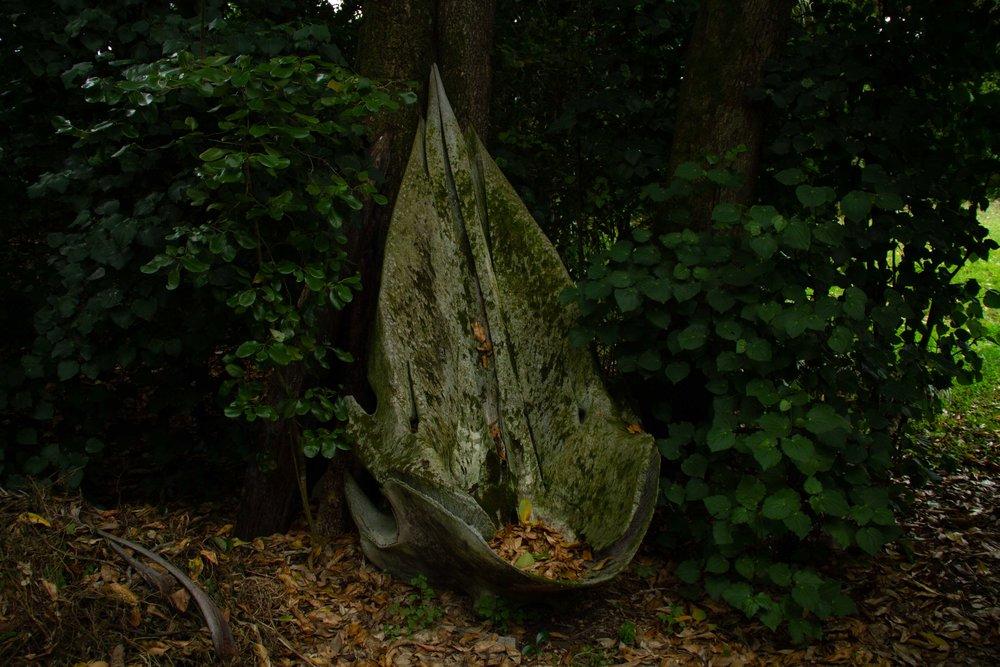 Parāoa skull, Wharekauri, 2019