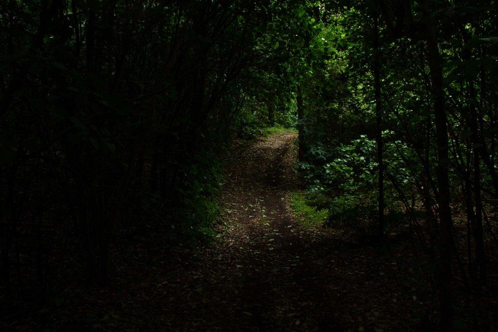 Dark Drive, Wharekauri, 2019