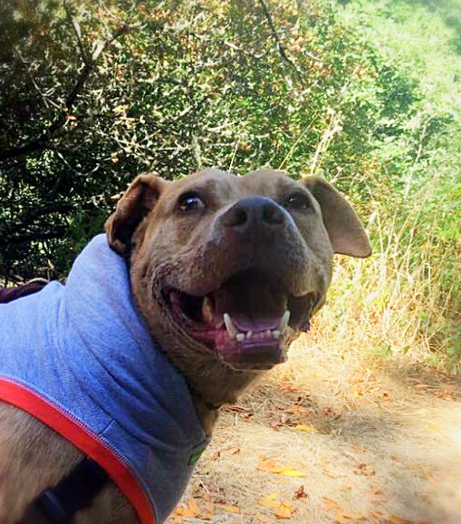 This is Montana, aka Felipe! Click on his pic to learn more about this handsome, outdoor-loving boy!