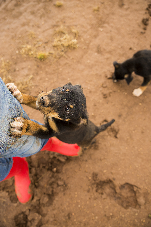 Muddy pup SS.jpg