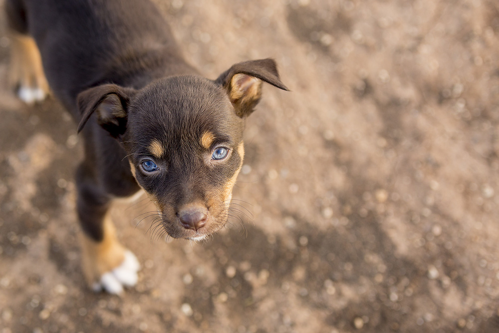 Pup1 SS.jpg