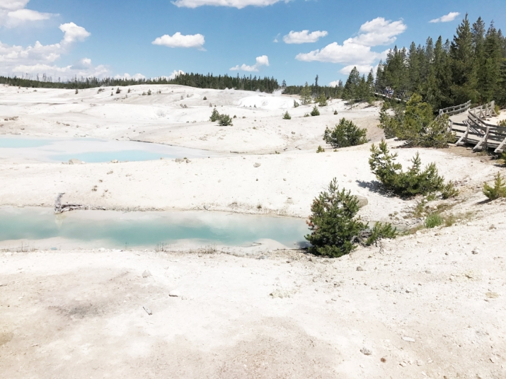 Thermal ground in Yellowstone