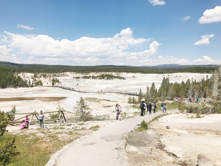 Thermal ground at Yellowstone