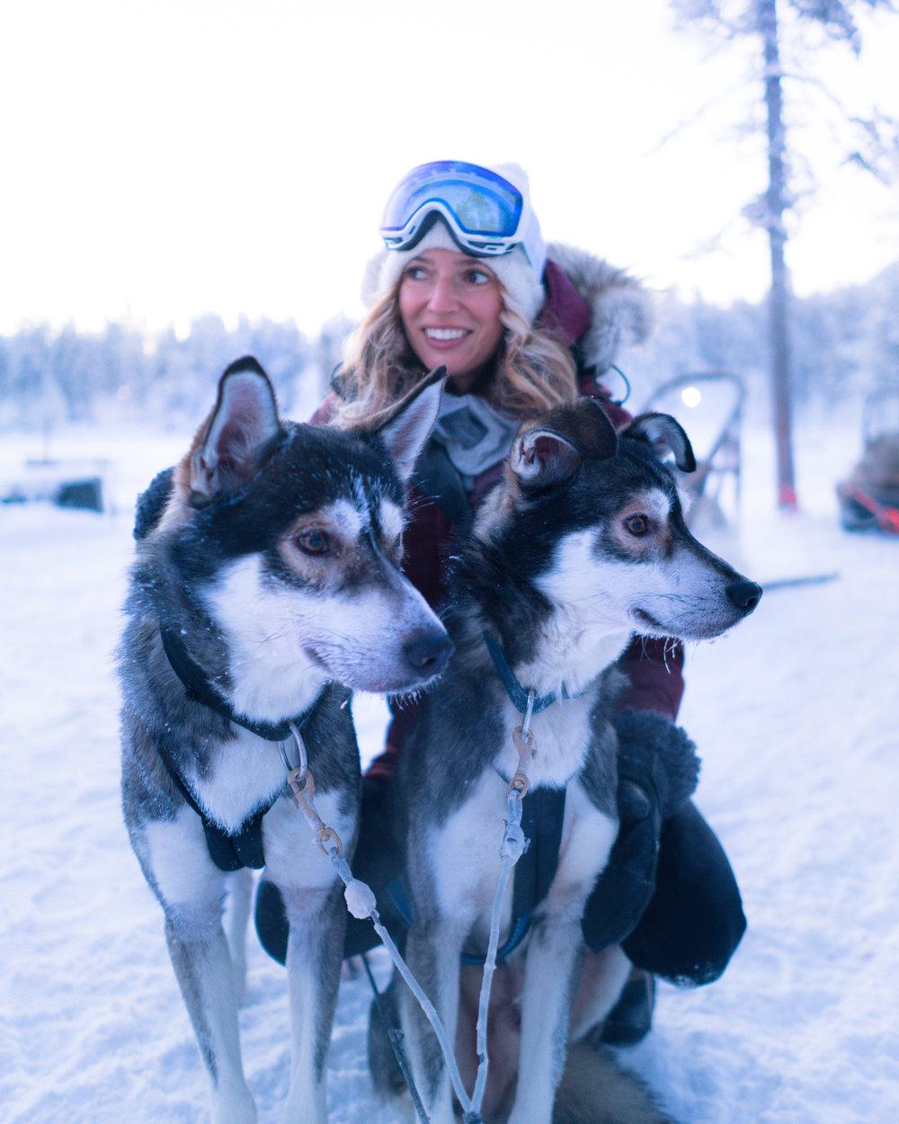 Husky Sledding Lapland Finland