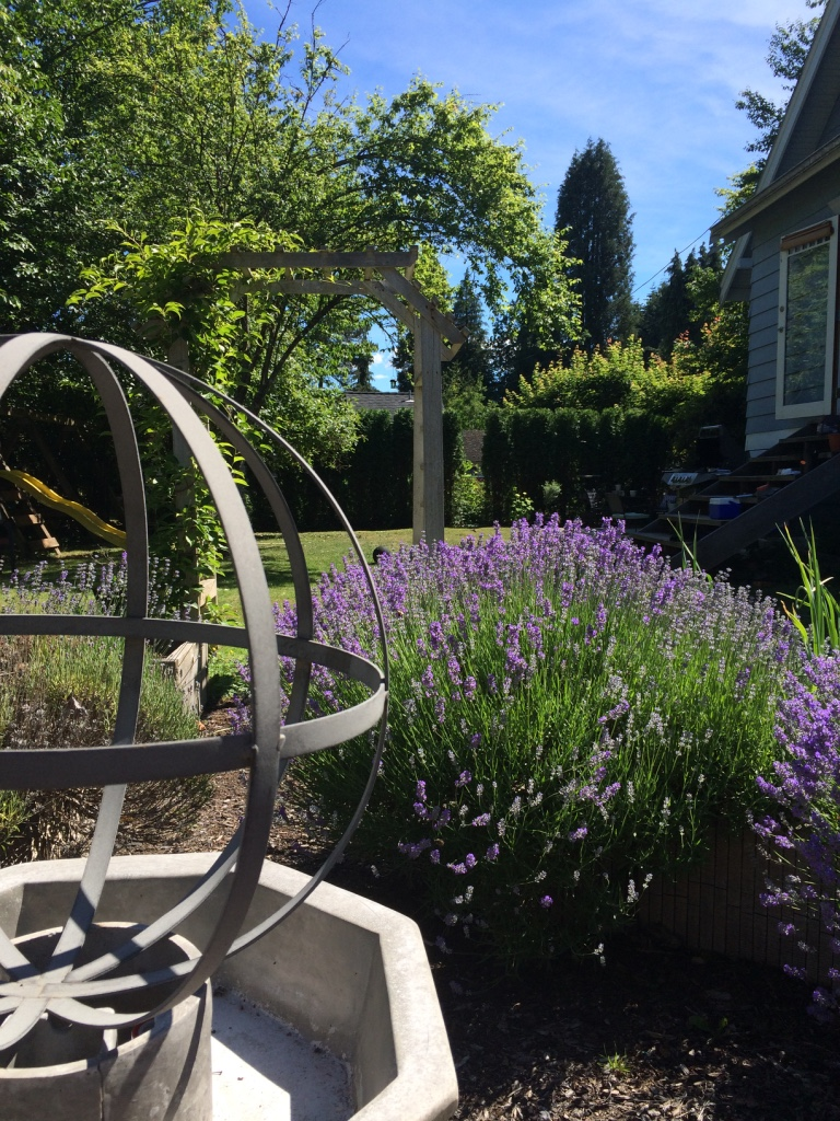 In a sunny spot in the back yard, a   previously empty space  was replaced with a lavender filled French style potager (kitchen garden) to grow fresh organic veggies.