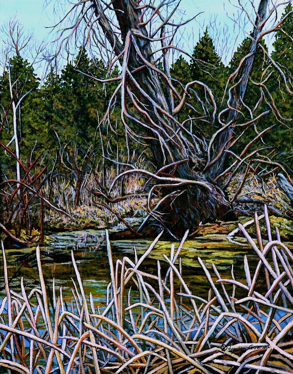Twisted Tree by Lynden Cowan, Oil 14x18, 2016 (1).jpg
