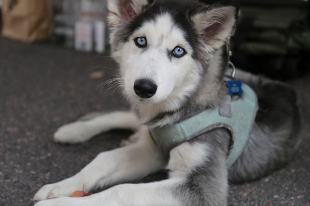 Screen Shot 2017-10-17 at 3.47.11 PM.png