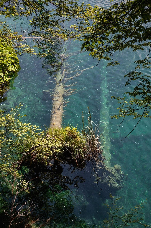 plitvice_submerged_trees.jpg