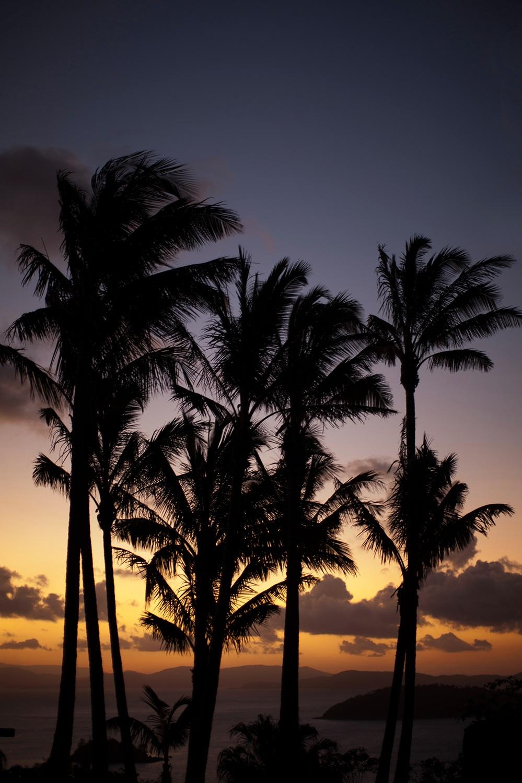 hamilton_island_sunset_vertical.jpg