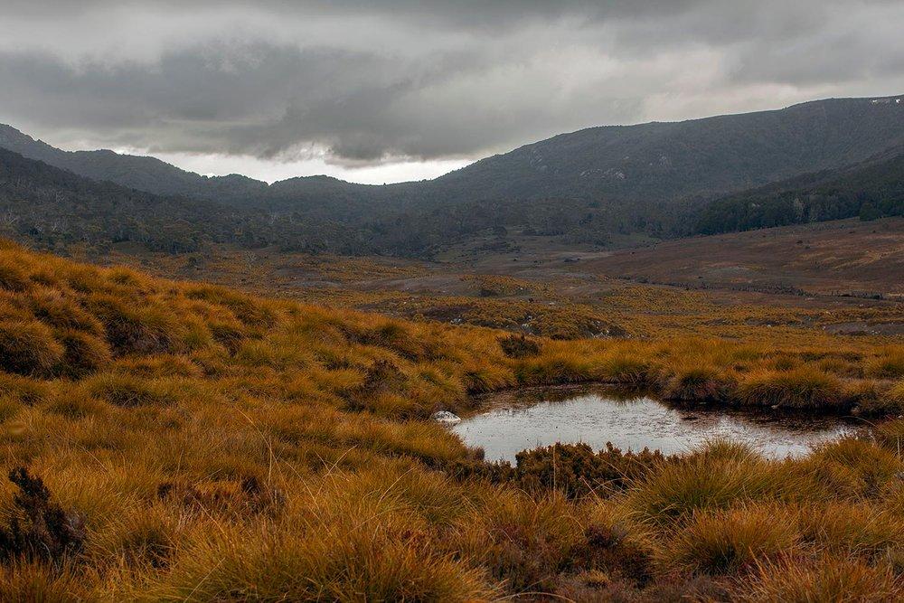 tasmania_button_grass.jpg