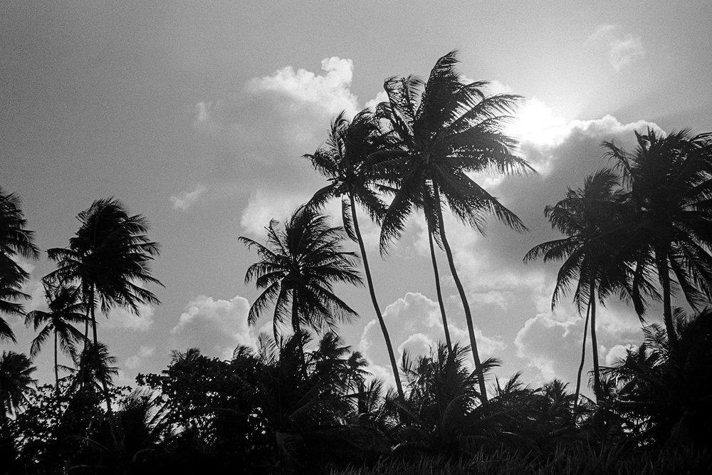 brazil_silhouette_trees.jpg