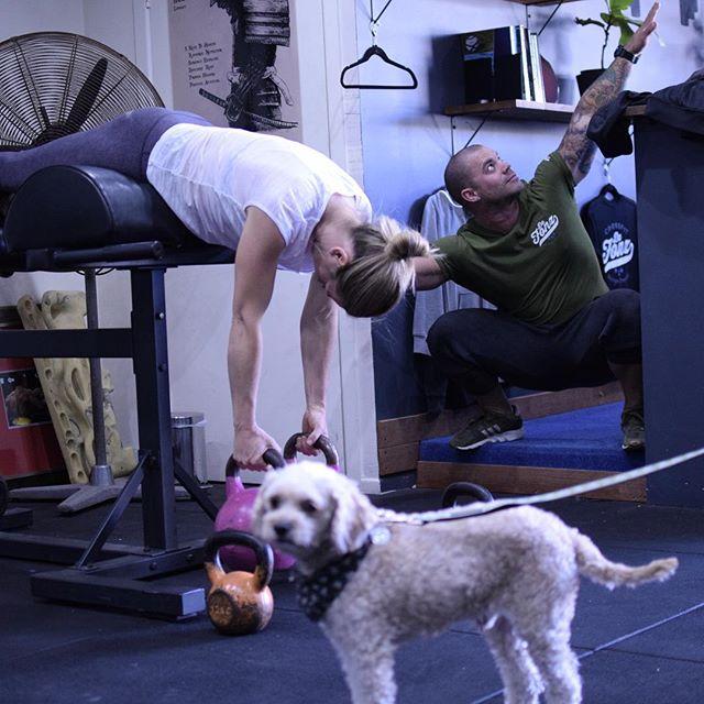 Just a regular fitness destination . . @pennymh7 @thisismitchdee  #gymdog #fitness #gymcartel #personaltrainer #latspread #goose #dogfriendlygym