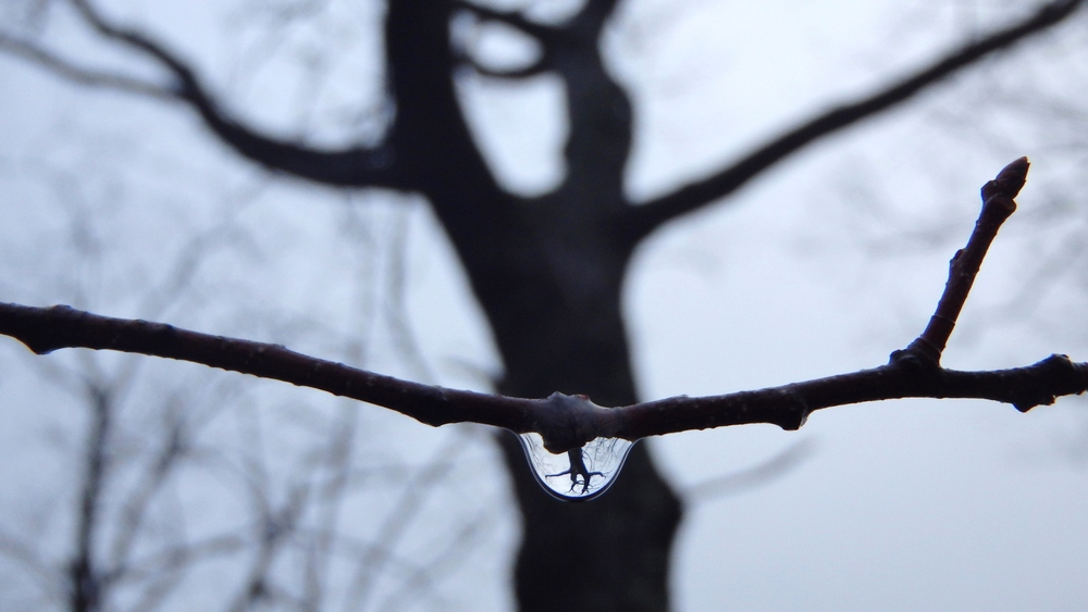 Droplet on Branch