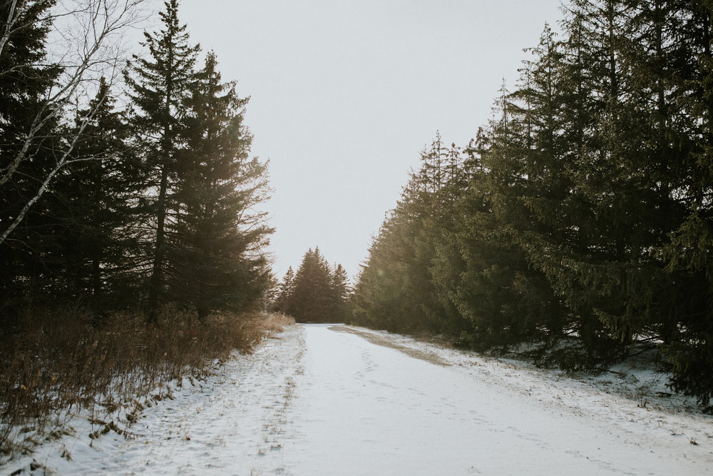 scenic winter view of evergreen trees