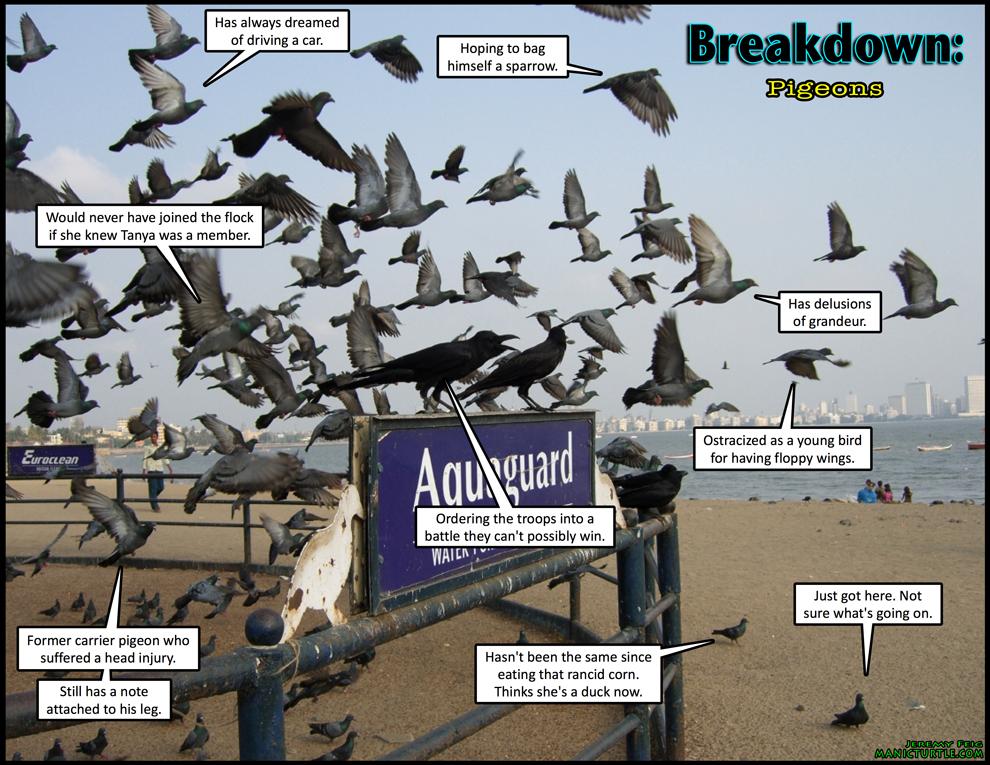 Breakdown: Pigeons