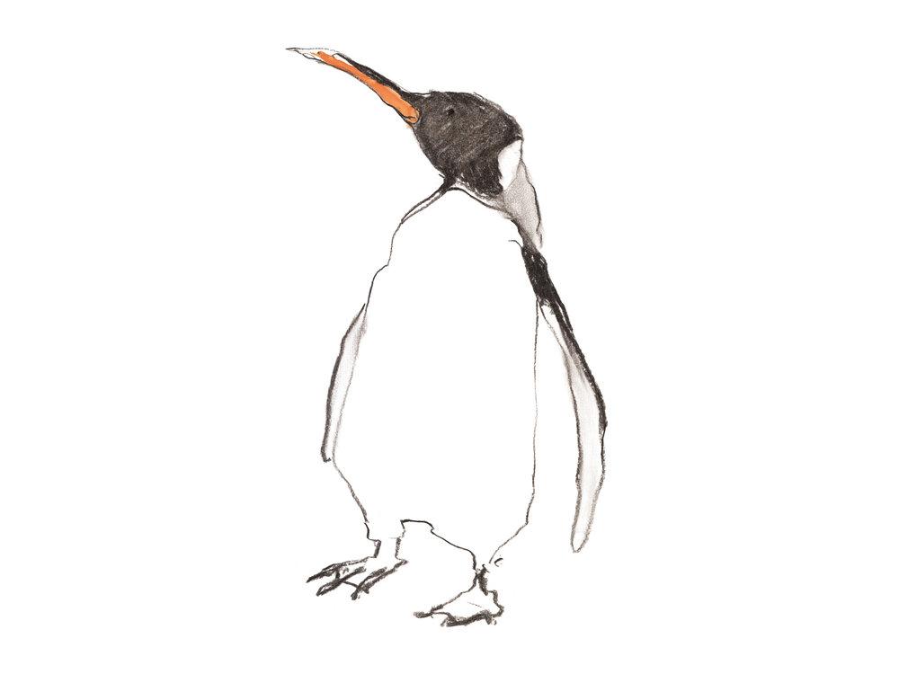 Penguin no date wide.jpg