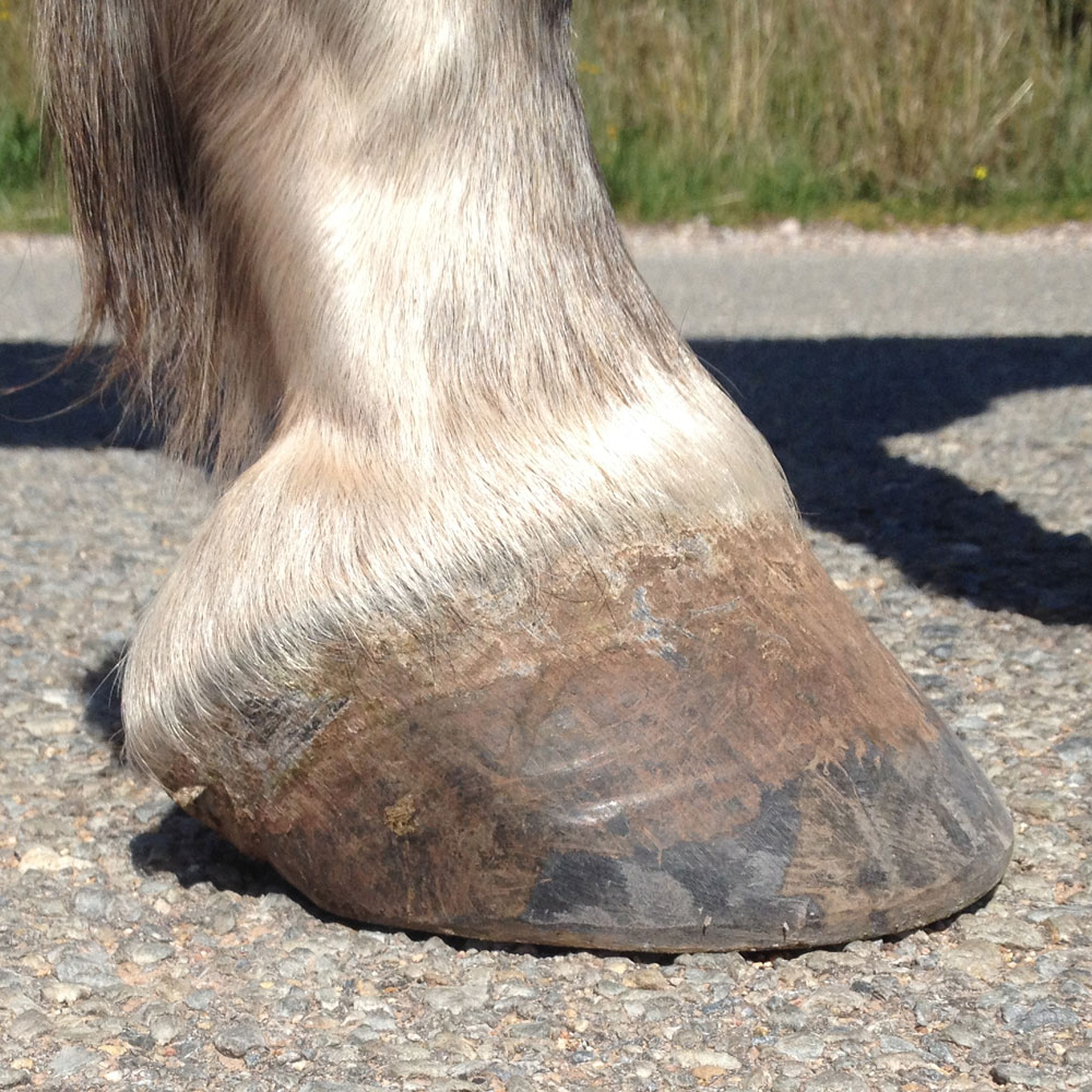 FRONT RIGHT HOOF  With the camera down almost to the ground