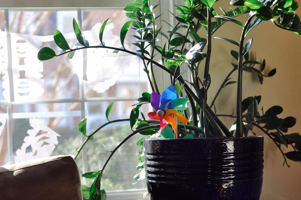 zeze plant