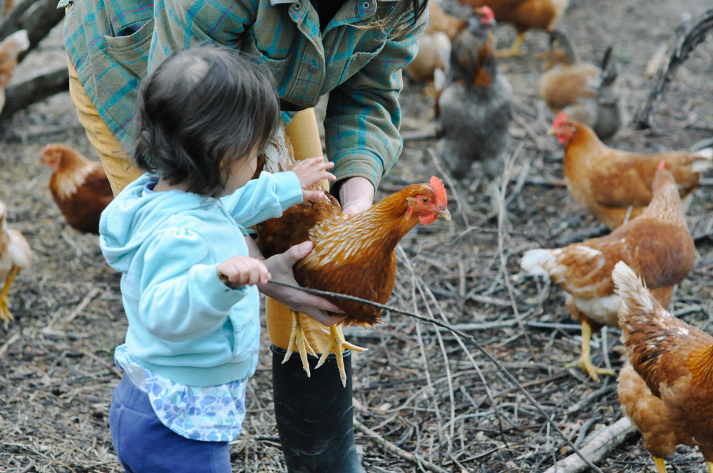 redtree farmstead chickens and becky.jpg