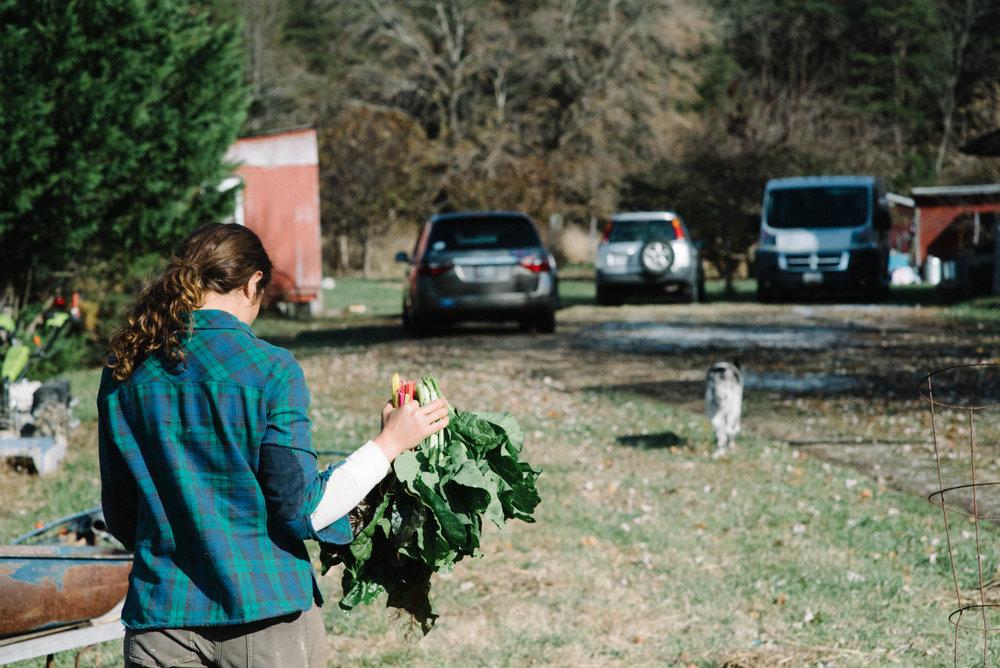 at redtree farmstead  friendly harvest.jpg