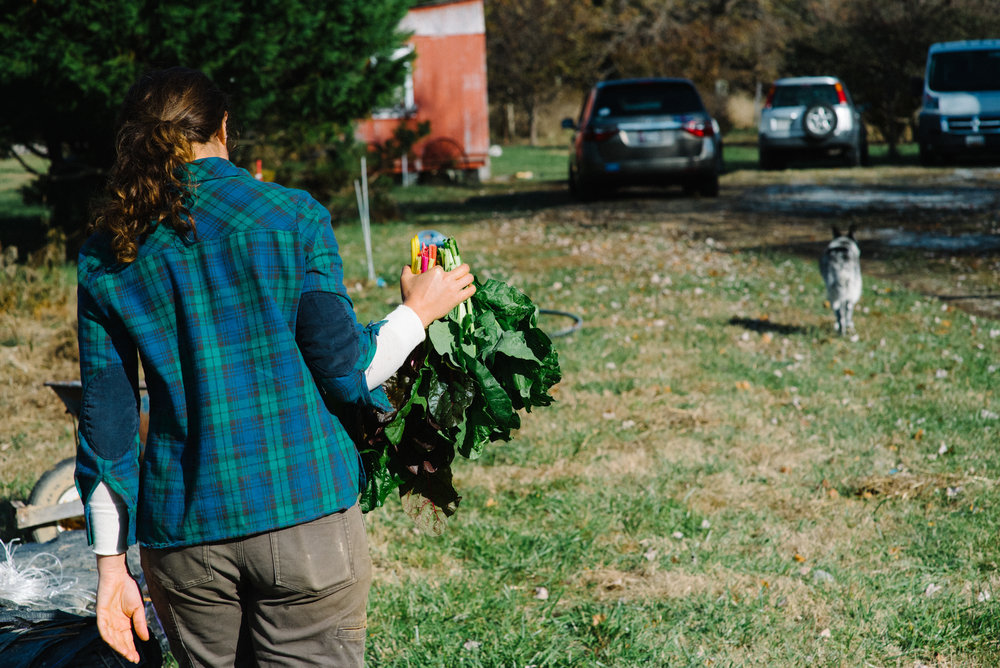 redtree farmstead_-22.jpg