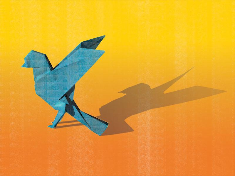 Bluebird_800x600.jpg