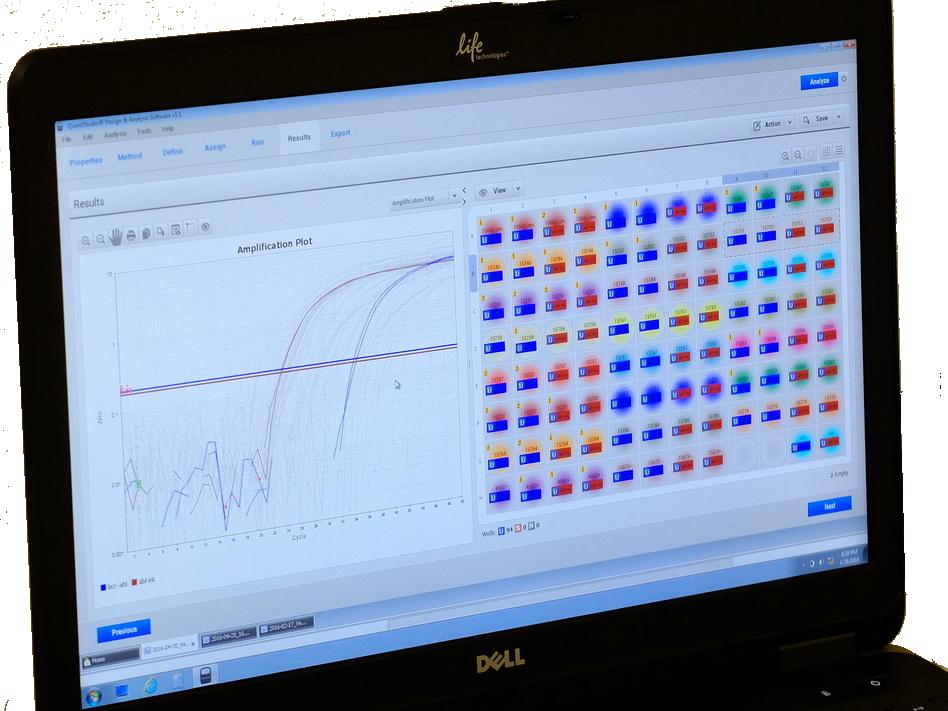 Valós idejűmennyiségi PCR vizsgálat eredményének kiértékelése.