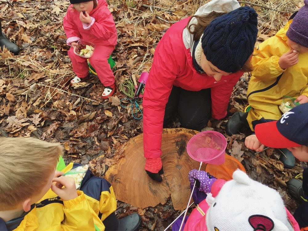 Mary Clair Sonneman counts the rings on a tree trunk with a class of 2-5 year-olds.